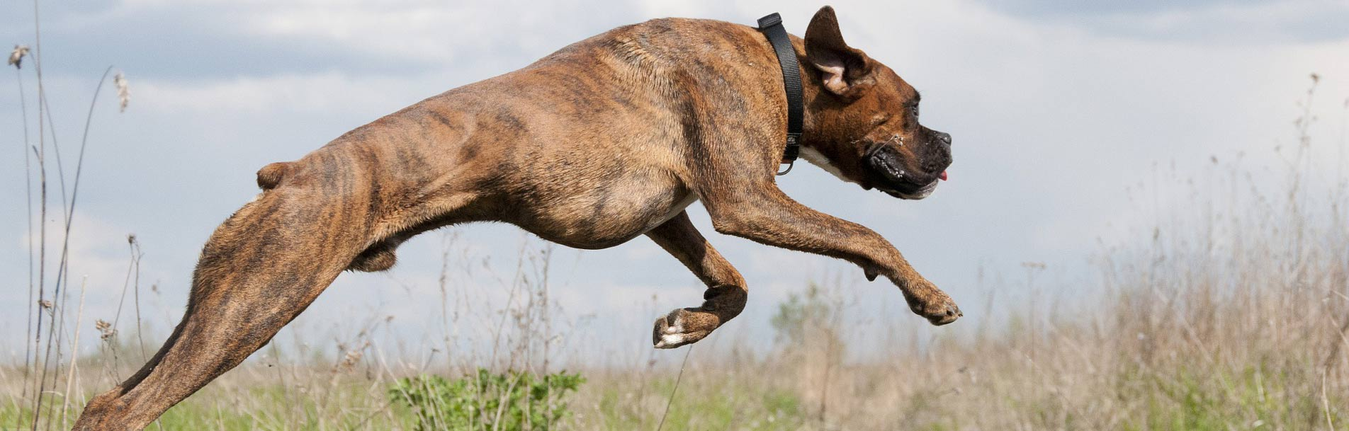Es lebe die Gier_Springender Hund_01_Cover